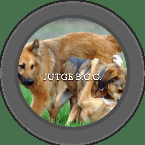 1a Jutge B.C.C. (500x500)
