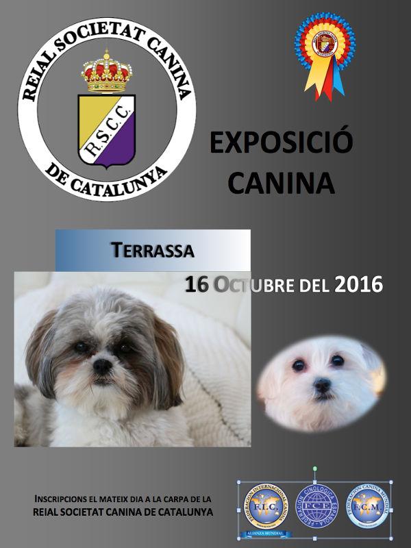 Expo canina - Terrassa 2016