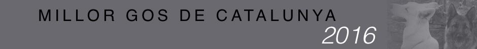 Banner Millor Gos de Catalunya 2016