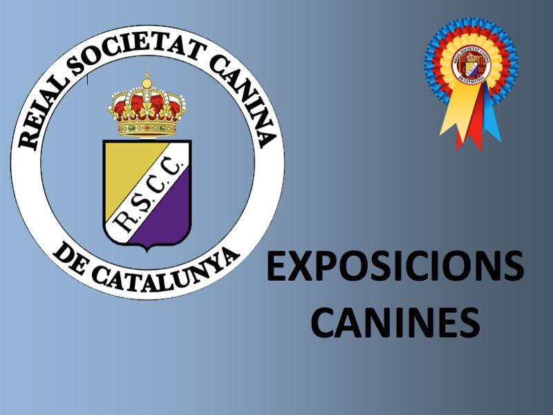 Exposicions (800x600)