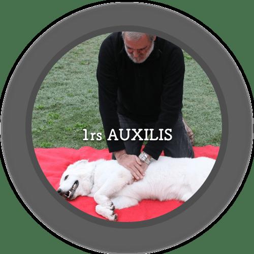1a Primers Auxilis (500x500)