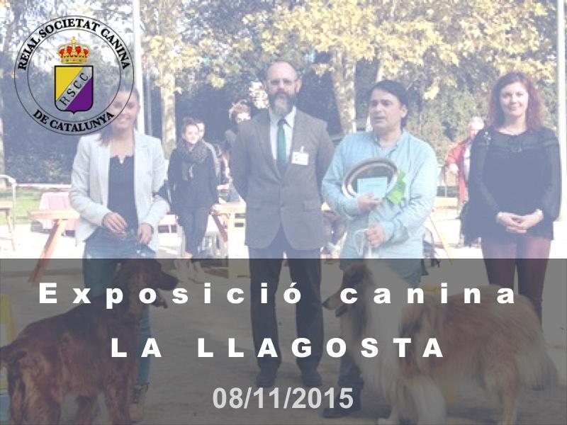 La Llagosta 2015-11-08 (800x600)
