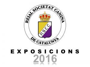 Galeria Exposicions 2016 (800x600)