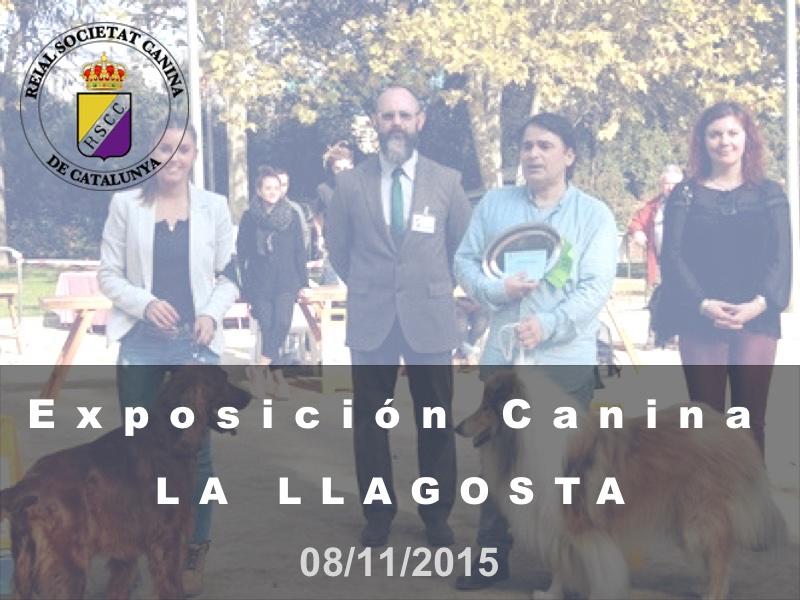 La Llagosta 2015-11-08 (800x600) Cast