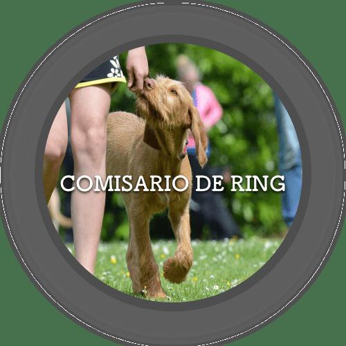 Comisario de Ring (500x500)