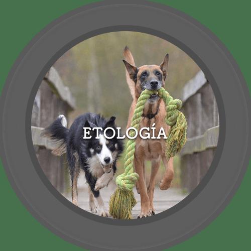 Etología (500x500)