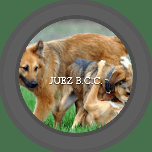 Juez de B.C.C. (500x500)