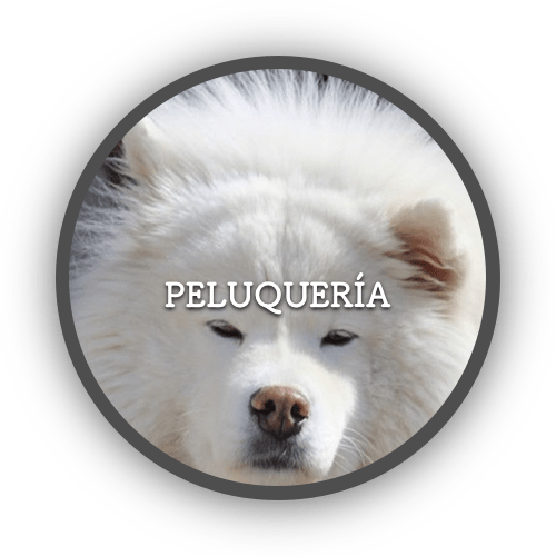 Peluquería (500x500)