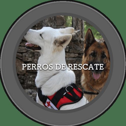 Perros de rescate (500x500)
